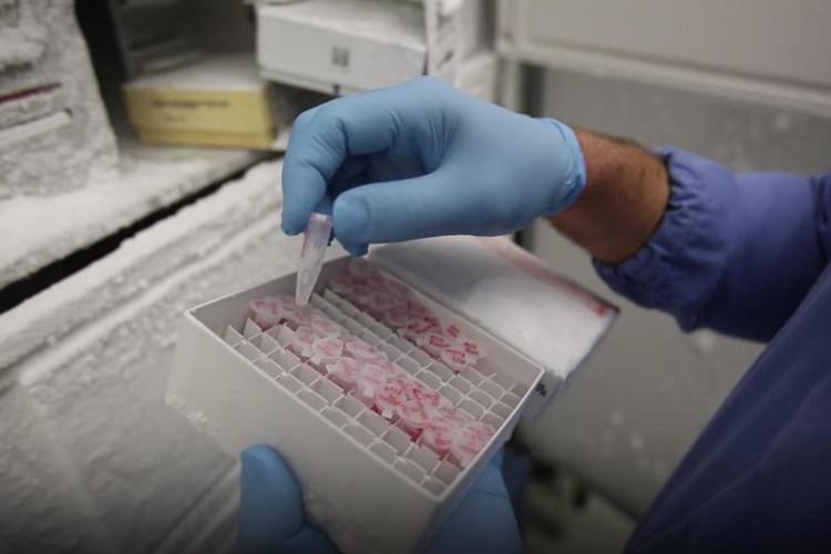 Loại thuốc mới bao gồm các đoạn ngắn của RNA được sắp xếp đặc biệt trên bề mặt các hạt nano vàng hình cầu.