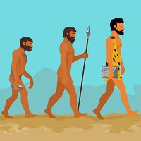 Lý do con người không có xương dương vật