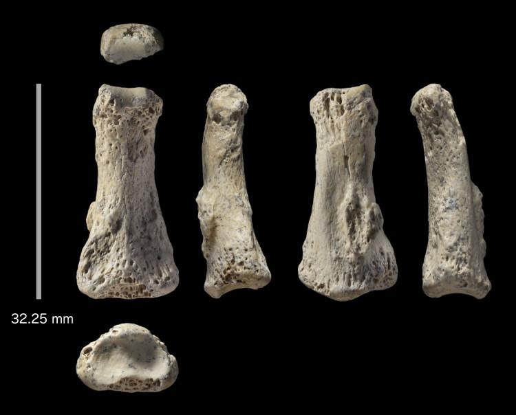 Mẩu xương hóa thạch 85.000 năm có độ dài 3,2cm.