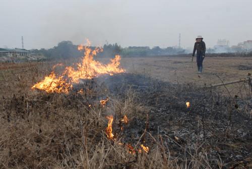 Ngoài việc rơm rạ thì đất trồng cây hoa màu được người dân Quảng Nam châm lửa đốt lấy tro.