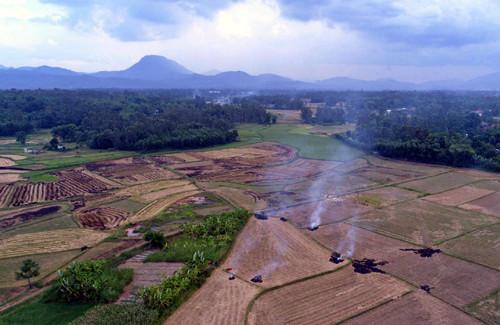 Một cánh đồng ở Quảng Nam được người dân đốt rơm rạ sau khi thu hoạch.