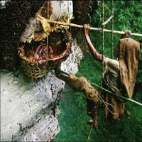 Rùng mình với thứ mật ong chết người, có thể khiến cả đoàn quân phát điên