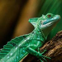 Nhiều vi rút cổ đại đang lẩn khuất trong ếch, cá, bò sát
