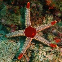 """""""Quái vật"""" kinh khủng nhất đại dương: Sở hữu nghìn mắt nhưng không có não"""