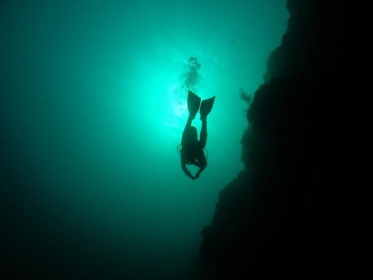 Hơn 95% cuộc sống dưới thế giới đại dương vẫn là ẩn số đối với nhân loại!