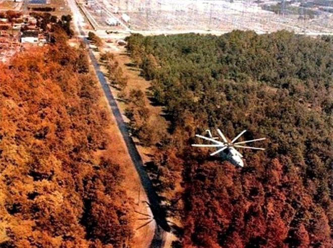 Rừng Đỏ cũng là nơi có chứa hoạt độ phóng xạ cao nhất trong toàn bộ khu vực.