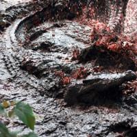 Ghê rợn những vụ động vật khát máu thảm sát con người