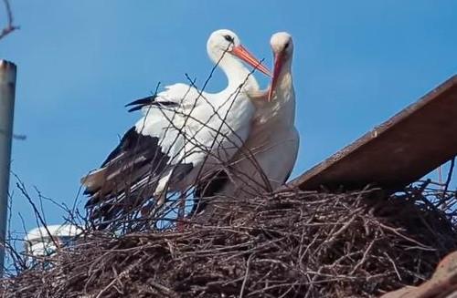 Klepetan và Malena đã kết đôi và có 62 con với nhau.