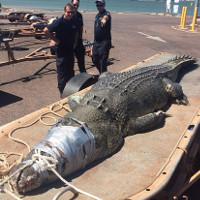 Cá sấu khổng lồ dài gần 5m sa lưới