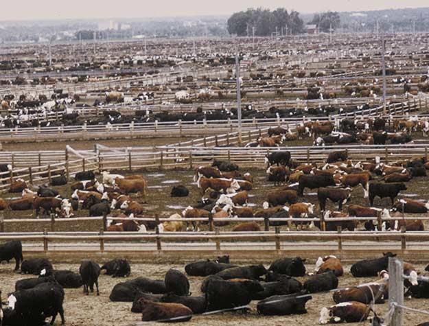 Tạo hóa đã sinh ra những loài động vật ăn thịt, và chúng không làm nguy hiểm gì đến sự tồn tại của hành tinh.