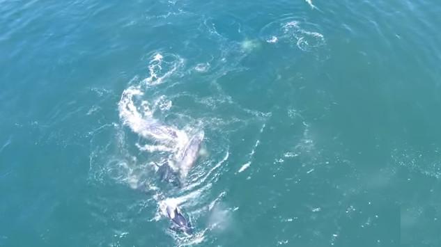 Cá voi sát thủ