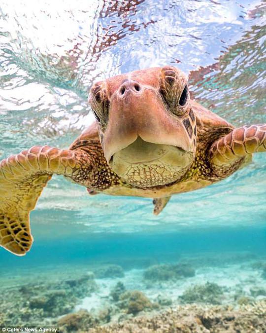 Mark Fitz kể rằng anh đã bơi cùng chú rùa này khá lâu.