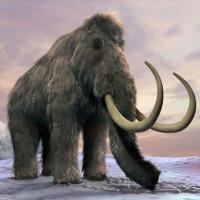"""Voi ma mút có thể """"tái sinh"""" và giải cứu Bắc Cực"""