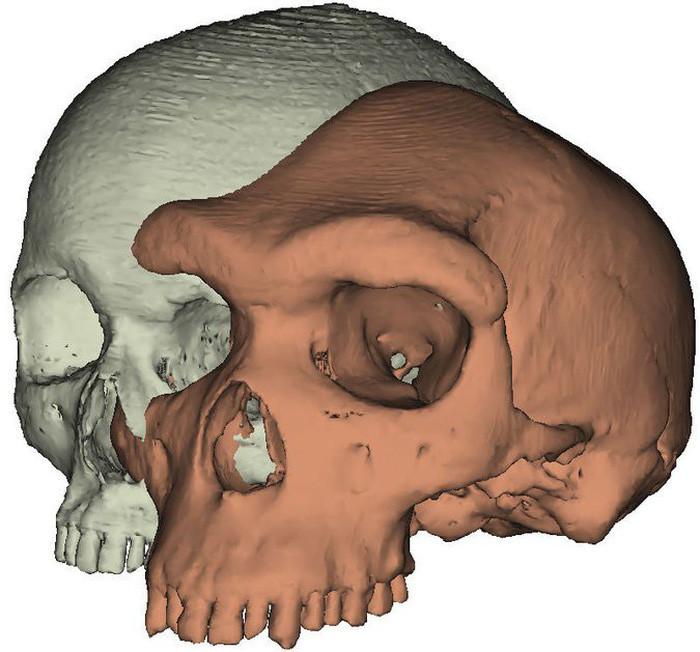 Nhóm nghiên cứu dùng kỹ thuật 3D để mô phỏng lông mày từ hộp sọ cổ