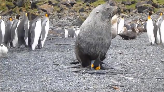 Hải cẩu và chim cánh cụt