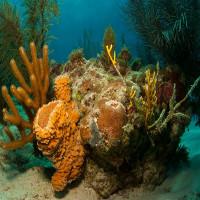 Phát hiện rạn san hô khổng lồ rộng 56.000km2 ngoài khơi Brazil