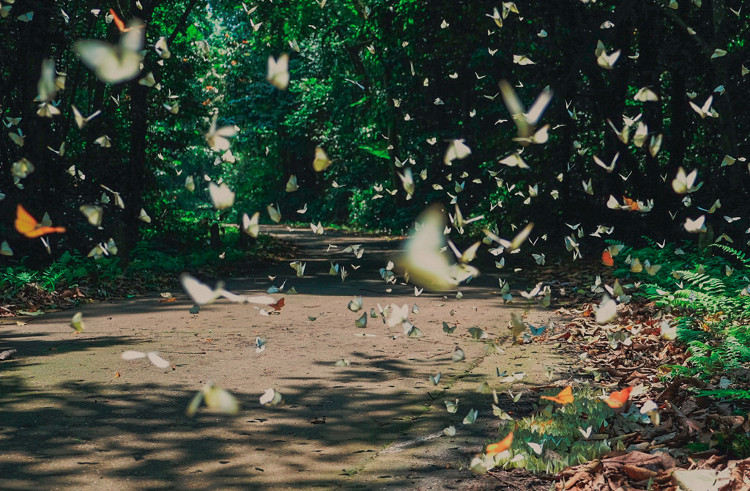 Giá vé vào tham qua vườn quốc gia Cúc Phương là 60.000 đồng/người