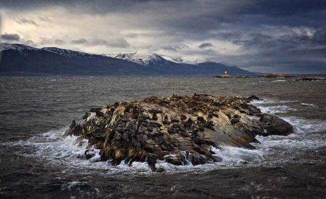 Sư tử biển nằm nghỉ trên mỏm đá