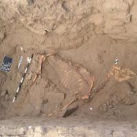 Ngựa hoàng gia Ai Cập vẫn còn lông sau 3.000 năm