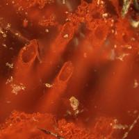 Sự sống lâu đời nhất Trái Đất vừa được phát hiện ở phía Bắc Canada