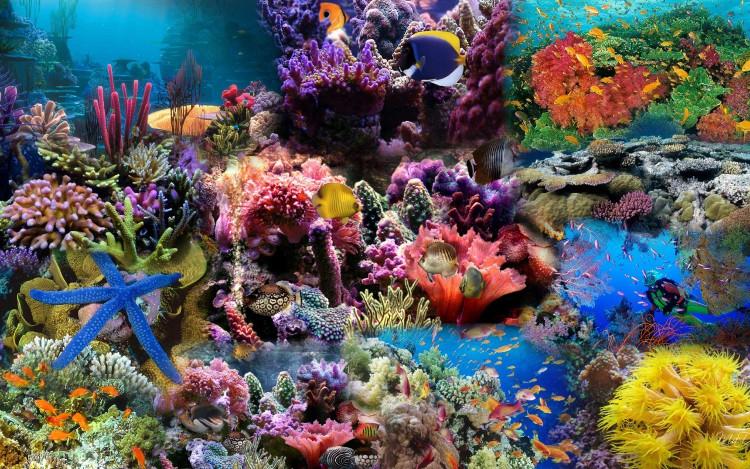 San hô cũng là lá chắn bảo vệ đường bờ biển, giúp giảm 97% sức mạnh của sóng.