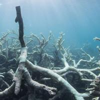 Chuyện gì sẽ xảy ra nếu toàn bộ rạn san hô trên Trái đất này biến mất?