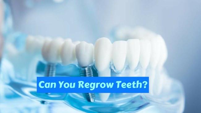 Răng tái sinh từ tế bào gốc