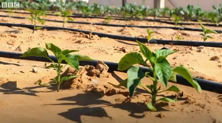 Loại đất này có thể gieo hạt chỉ sau 7 tiếng.
