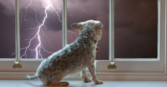 Nỗi sợ hãi của chó có liên quan đến mưa giông.
