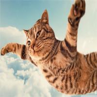 Ông trùm diễn đàn Reddit tiết lộ lý do vì sao cư dân mạng phát cuồng vì mèo