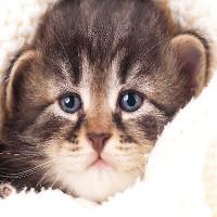 Mèo cũng biết khóc, và bạn phải cẩn thận với điều đó