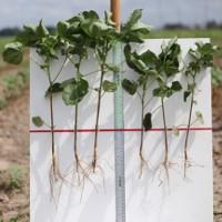 Phương pháp mới giúp tăng năng suất cây trồng không cần dựa vào biến đổi gene