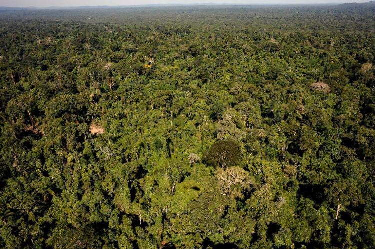 Một góc rừng Amazon.