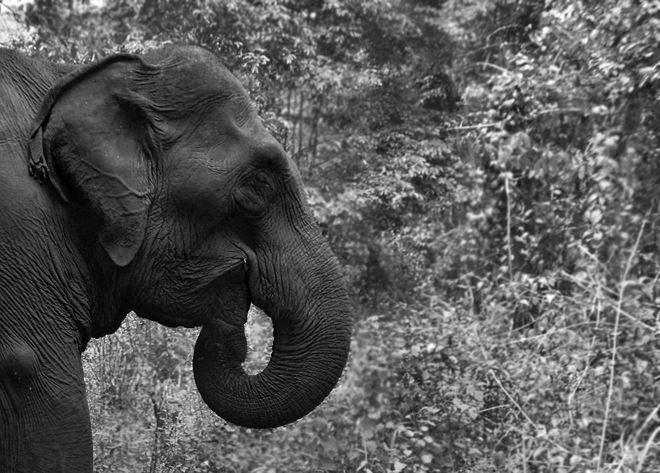 Theo Cristophoro Borri, voi Đàng Trong có thể sống cả trăm năm.