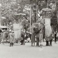 """""""Bí quyết"""" thuần hóa voi của người miền Trung 400 năm trước"""
