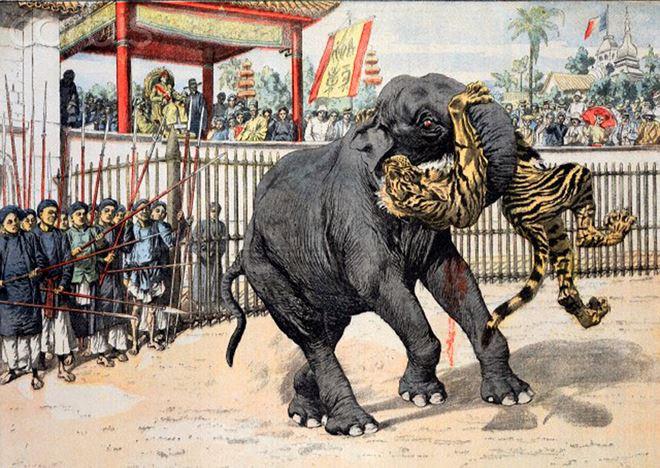 Hình vẽ cảnh voi đấu với hổ cho vua xem.