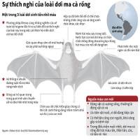 Sự thích nghi của loài dơi ma cà rồng hút máu