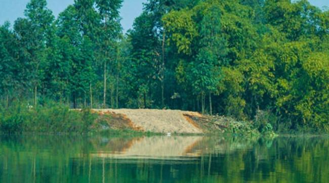 Bãi cát nhân tạo nơi rùa thường xuất hiện ở Đồng Mô.