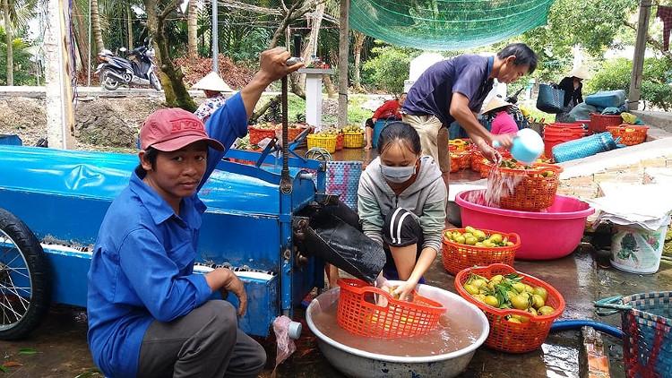 Máy rửa trái hồng xiêm giúp tiết kiệm công sức, thời gian của bà con nông dân.
