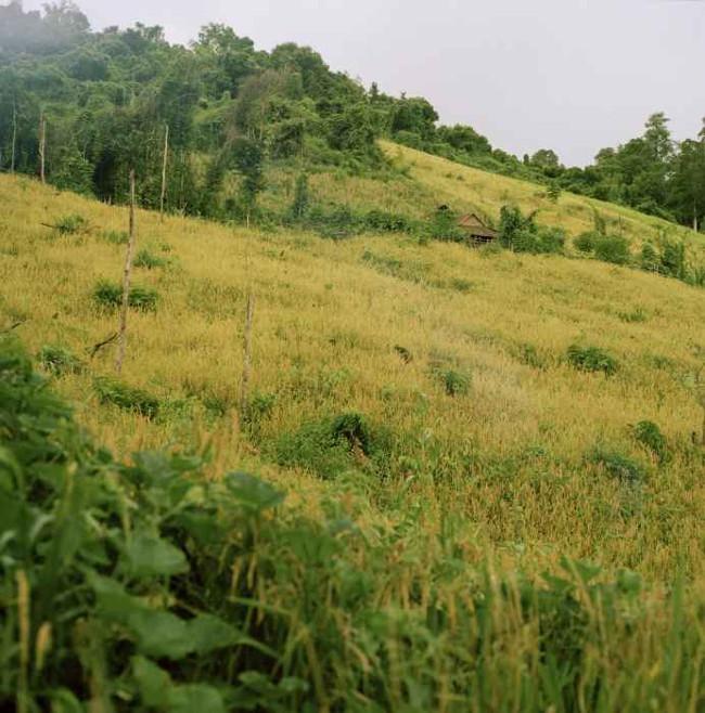 Nơi sinh sống của bộ lạc Kreung, đông bắc Campuchia.