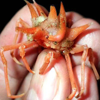 """Phát hiện các sinh vật """"ngoài hành tinh"""" dưới đáy biển Indonesia"""