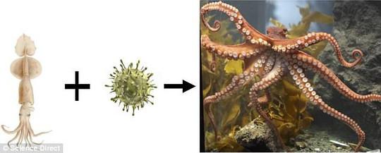Một loài thân mềm cổ đại đã kết hợp với vi sinh vật bí ẩn ngoài trái đất và cho ra đời giống bạch tuộc
