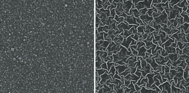 Màng lọc ở dạng điểm và dạng ống dưới kính hiển vi.