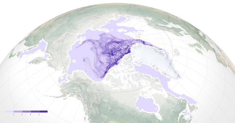 Băng bắc cực
