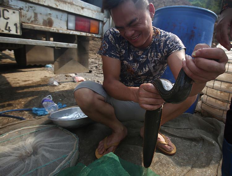 Người đàn ông cố giữ con cá chạch dài 70cm.
