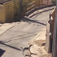 Chú chó phô diễn kỹ năng leo tường siêu đẳng