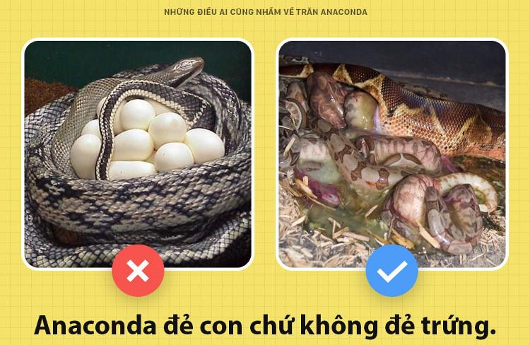 Khác với nhiều đồng loại, Anaconda tôi sinh con chứ không hề đẻ trứng.