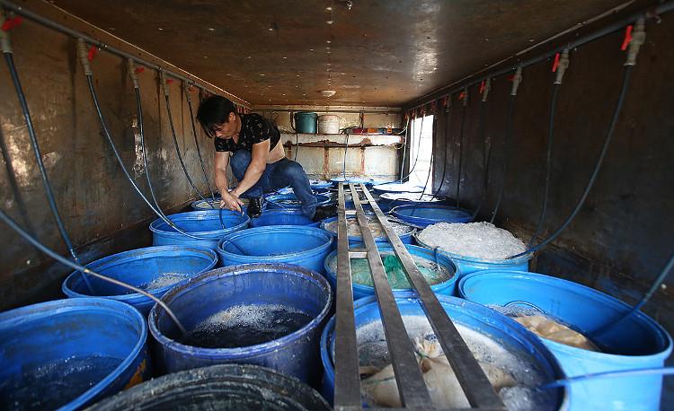 Mỗi chiếc xe tải chở hàng chục thùng cá lớn nhỏ.
