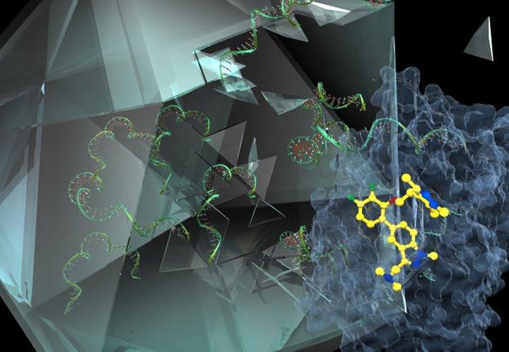 """Phân tử IMP-1088 (màu vàng) """"chặn"""" protein NMT (màu xanh) khiến virus gây cảm lạnh không thể tồn tại"""