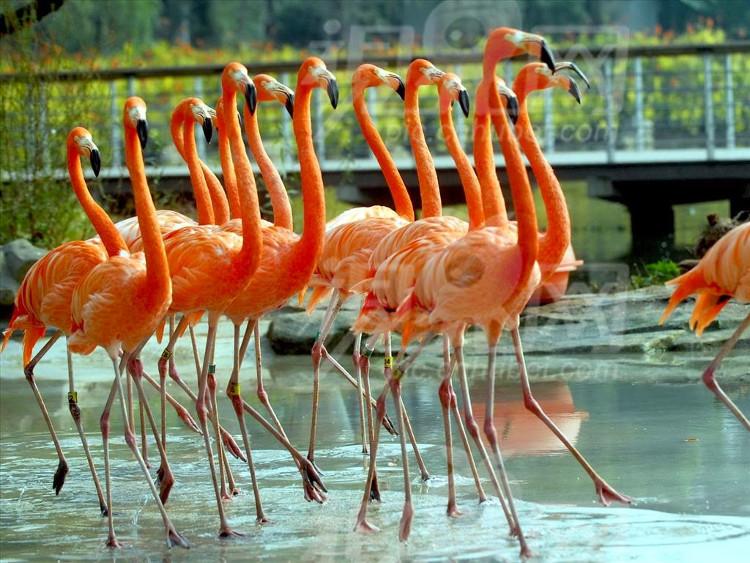 Chim hồng hạc